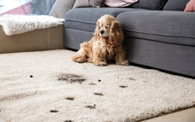 Why you have to get your carpets professionally cleaned after flood damage